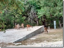 LakePointe deer